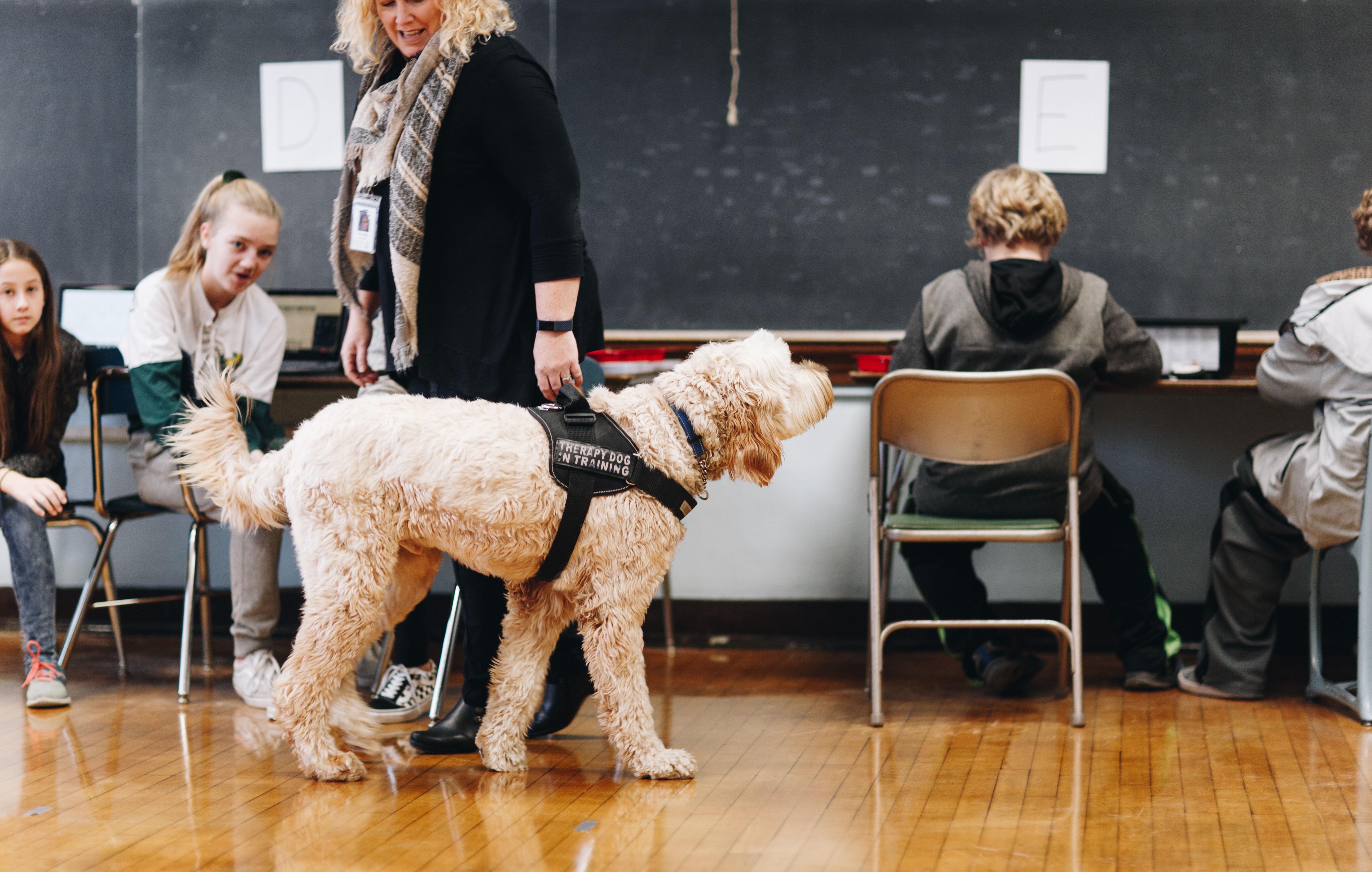 Therapy Dog at Calumet Schools